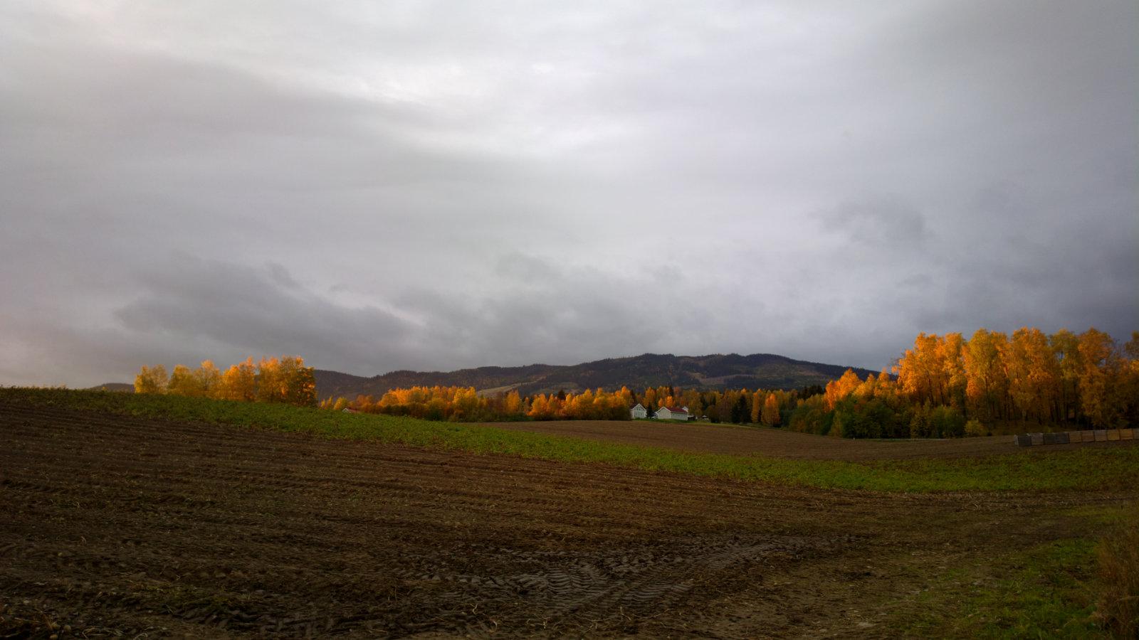 Norwegia (224)
