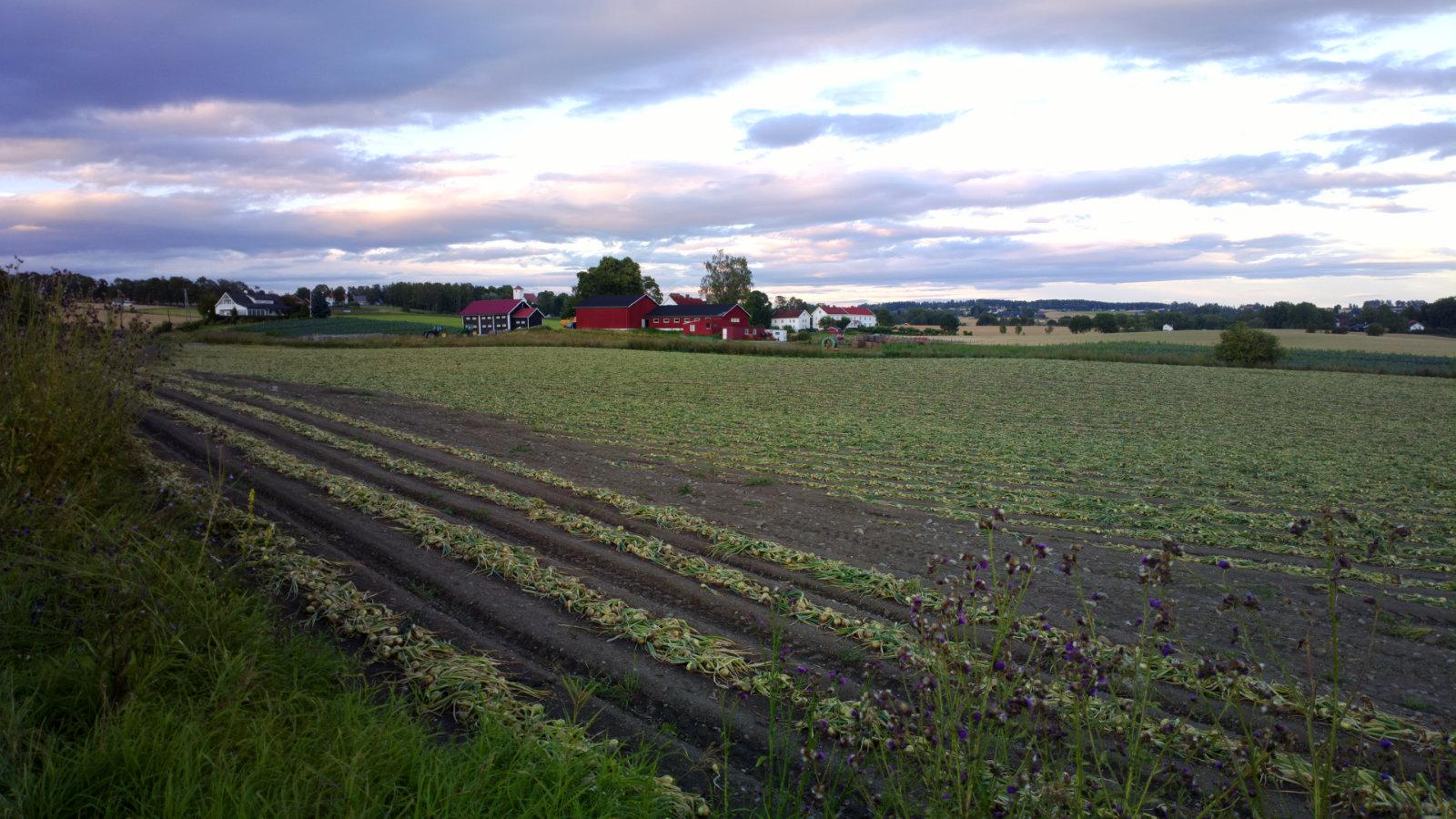 Norwegia (3)